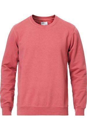 Colorful Standard Miehet Collegepaidat - Classic Organic Crew Neck Sweat Raspberry Pink