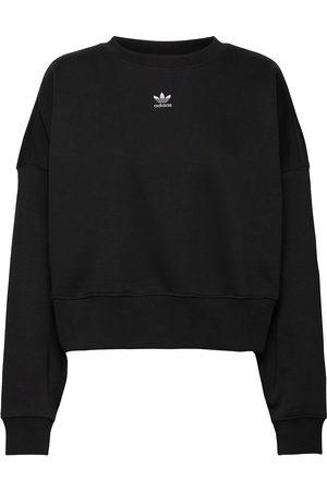 adidas Naiset Collegepaidat - Sweatshirt Svetari Collegepaita