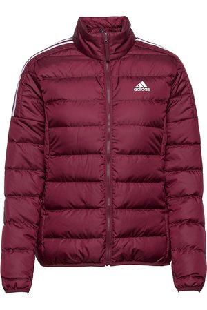 adidas Essentials Down Jacket W Vuorillinen Takki Topattu Takki Punainen