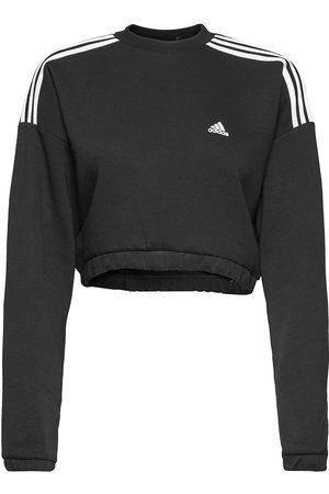 adidas Performance Naiset Collegepaidat - Crop Crew Sweatshirt W Svetari Collegepaita