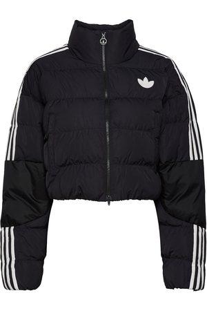 adidas Short Synthetic Down Puffer Jacket W Vuorillinen Takki Topattu Takki